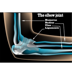 The elbow joint vector