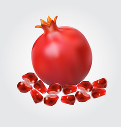 Ripe pomegranate fruit and pomegranate seeds vector