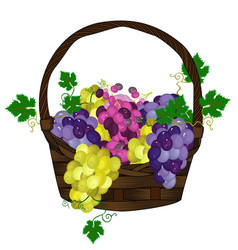 grapes basket vector image vector image