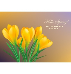 Spring crocuses vector image