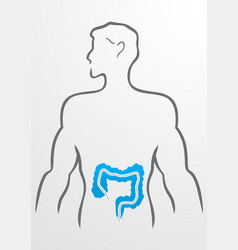 Intestines and human body - vector