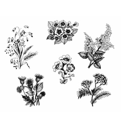 Summer garden blooming flowers black and white vector