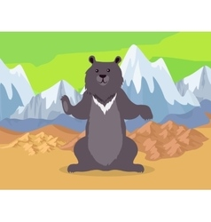 Brown bear in asia mountains icon vector