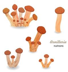 Edible mushroom armillaria vector image
