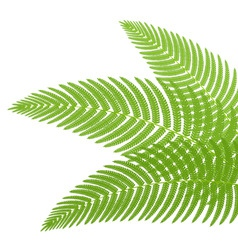 fern vector image vector image