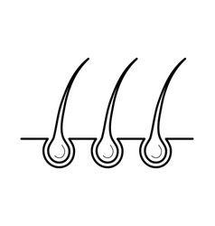 Hair and bulb in the skin surface vector