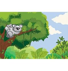 Koalas vector image vector image