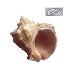Realistic seashell isolated vector