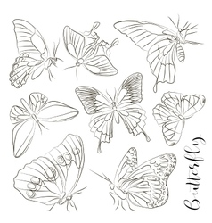 Big collection of butterflies vector image