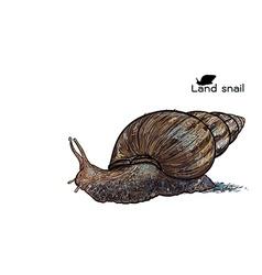 Crawling land snails vector