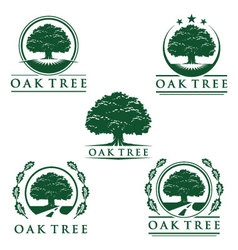 Eco green oak tree logo design vector