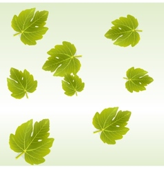Fig leaves background vector image