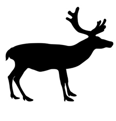 Silhouette deer with great antler on white vector image
