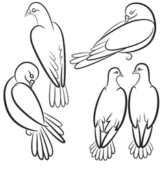 Black and white contours of four pigeons that sit vector