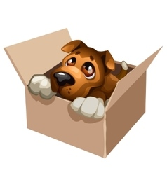 Sad stray dog cute in a cardboard box vector