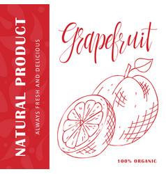 Fruit element of grapefruit hand drawn vector