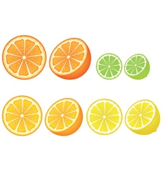 Various citrus slices vector