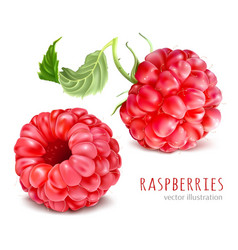 Raspberries vector