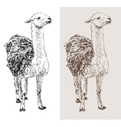 Artwork lama digital sketch of animal vector