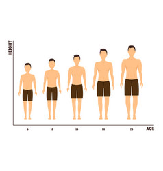 Height and age measurement of growth from boy to vector