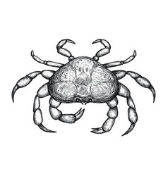 Crab hand drawn isolated icon vector