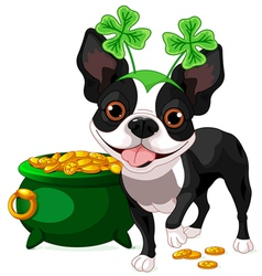 Boston terrier celebrates saint patrick day vector