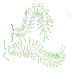 Hand-drawn centipede cartoon insect icon vector