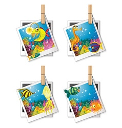 Four photo frames of fish vector image