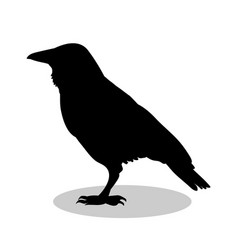 raven bird black silhouette anima vector image