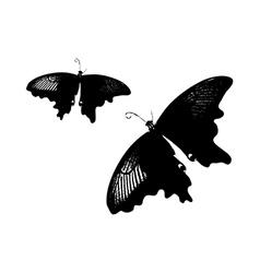 A pair of black butterflies vector image