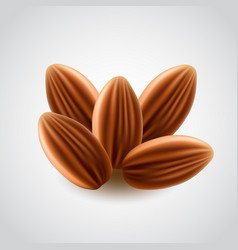Almonds nuts isolated vector
