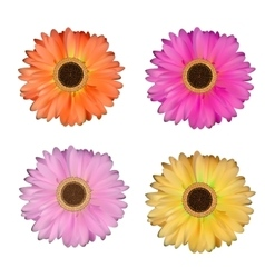 Gerbera flower set white background vector