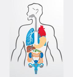 Human organs and human body - vector image vector image