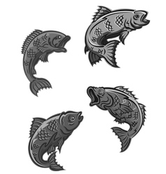 Perch carp vector