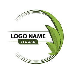 cannabis green leaf logo vector image vector image