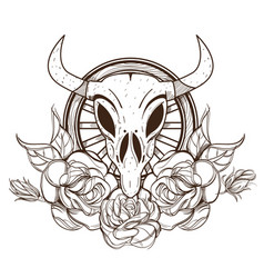 cow or bull skull with roses outline isolated on vector image vector image
