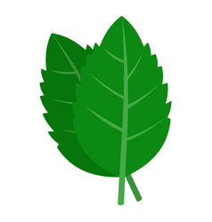 Fresh green basil leaves icon isolated vector