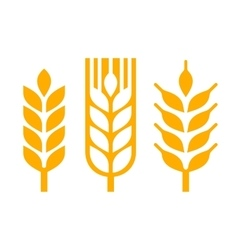 Wheat ear spica icon set vector