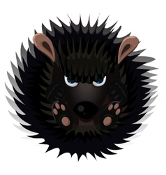 Hedgehog isolated on white vector