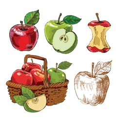 Hand drawn apples vector