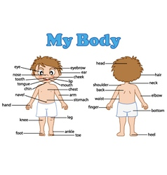 Vocabulary part of body vector