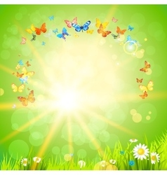 Eco summer background with flowers vector