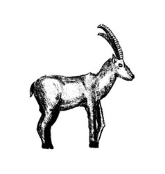 goat grunge style icon vector image vector image