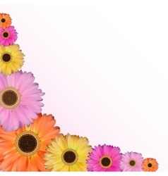 Gerbera flower natural background vector