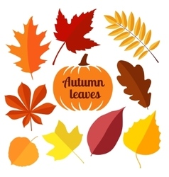 autumn leaves set 1 vector image