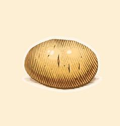 Potato engraving style vector