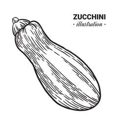 zucchini fresh food hand drawn vector image vector image