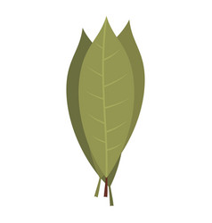 bay laurel leaves icon isolated vector image