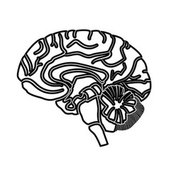 brain black icon vector image