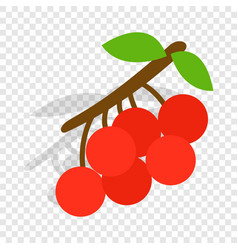 rowan branch isometric icon vector image
